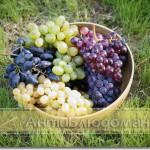 Виноград разных сортов