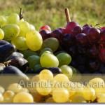Сочный, сладкий виноград!