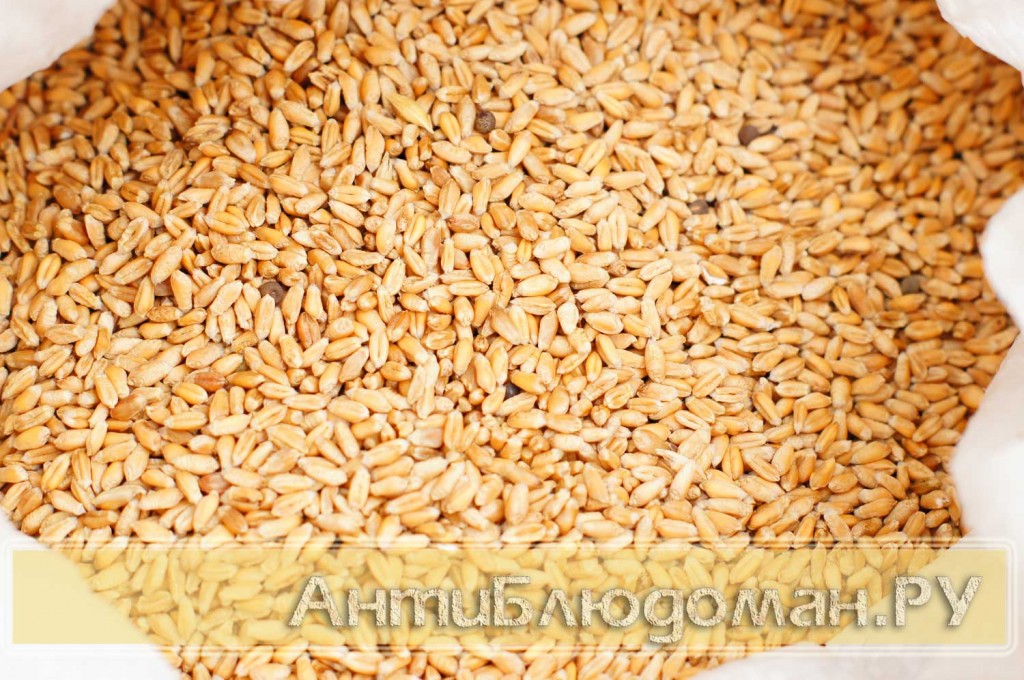 Пшеница для проращивания БИО